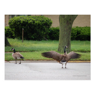 Geese Street Customized Product Postcard