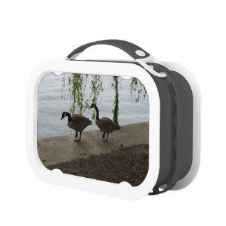 Geese Strolling Lunch Boxes