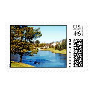 Geese swimming in half frozen lake stamps