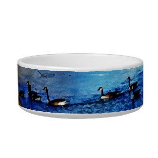 Geese swimming in half frozen lake - trees pet water bowl