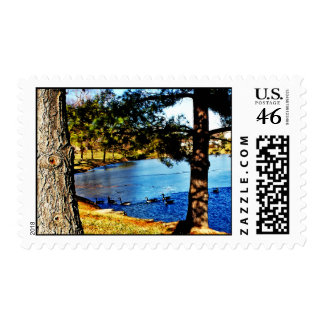 Geese swimming in half frozen lake - trees stamp