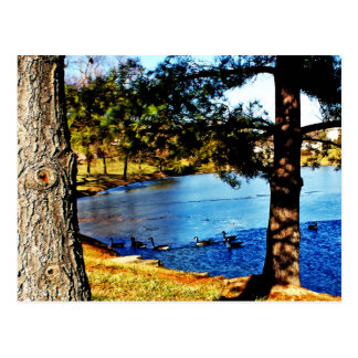 Geese swimming in half frozen lake - trees postcard