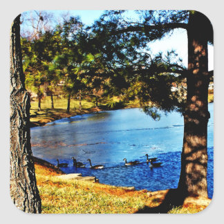 Geese swimming in half frozen lake - trees square sticker