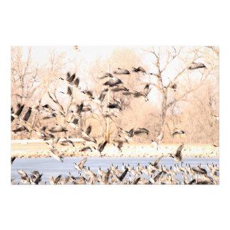 Geese Taking to Flight Photo Art