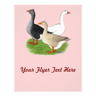 Geese:  Tufted Trio Full Color Flyer