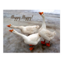 Geese white postcard