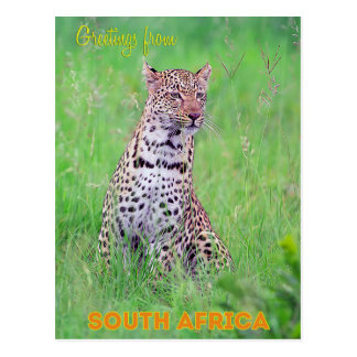 Geetings from South Africa Postcard
