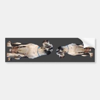 Gefleckte Dogge Bumper Sticker