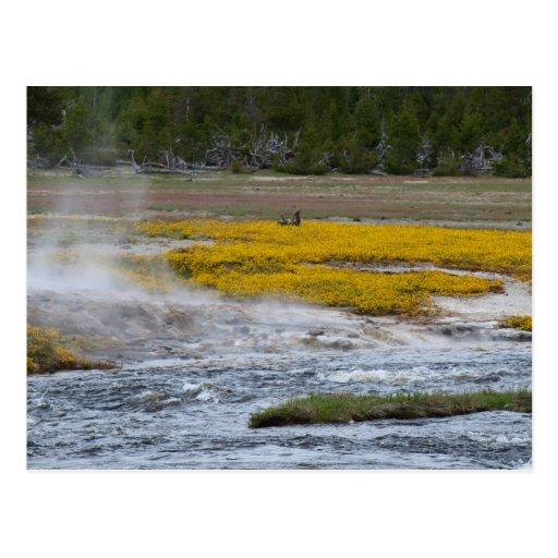 Géiseres de Yellowstone y flores salvajes Tarjetas Postales