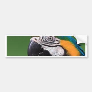 Gelbbrustara Bumper Sticker