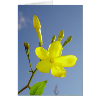 Gelsemium Sempervirens Isolated on Blue Sky Card