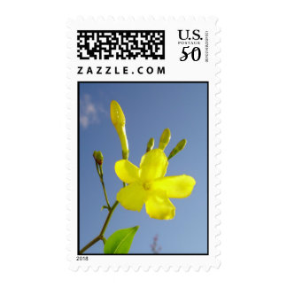 Gelsemium Sempervirens Isolated on Blue Sky Postage