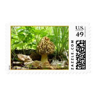 Gem of the Forest - Morel Mushroom Postage