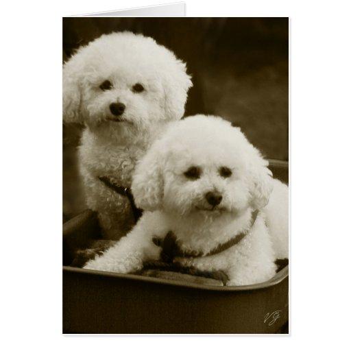 Gemelos blancos del perrito del caniche tarjetas