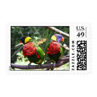 Gemelos coloridos del pájaro envio