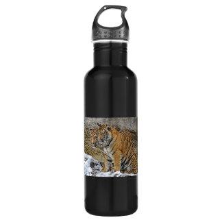 Gemelos de Cubs de tigre