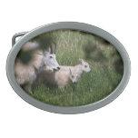 Gemelos de la cabra de montaña hebilla de cinturon oval
