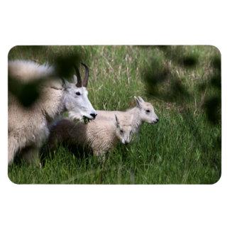 Gemelos de la cabra de montaña imán de vinilo