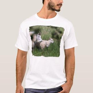 Gemelos de la cabra de montaña playera