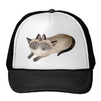 Gemelos del gato siamés gorro