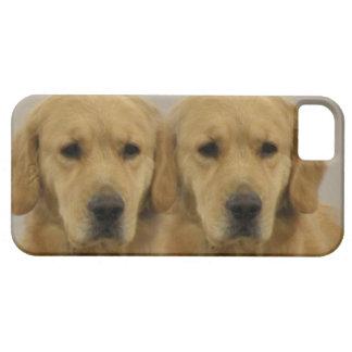 Gemelos del golden retriever iPhone 5 carcasas