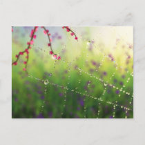 Gems of a Spring Morning Postcard
