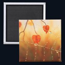 Gems of an Autumn Morning Magnet