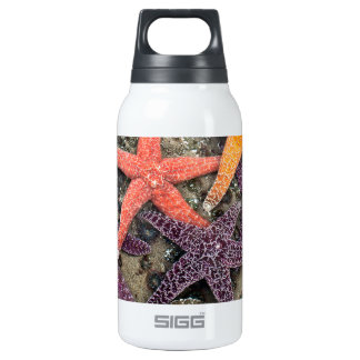 Gems of the sea insulated water bottle