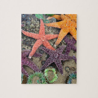 Gems of the sea jigsaw puzzle