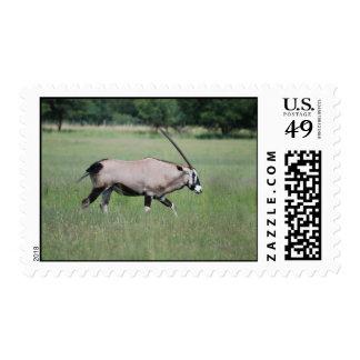 Gemsbok antelope postage stamp