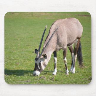 Gemsbok grazing mouse pad
