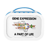 Gene Expression A Part Of Life (DNA Replication) Replacement Plate
