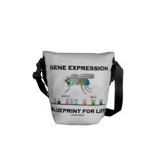 Gene Expression Blueprint For Life Homeobox Genes Messenger Bag