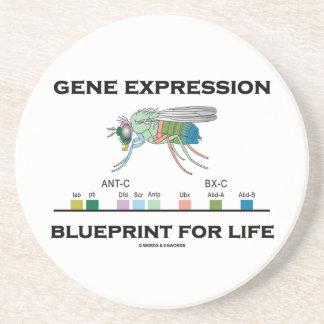 Gene Expression Blueprint For Life Homeobox Genes Sandstone Coaster