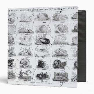Genera of Shells jigsaw, pub. by W. Edwards Binder