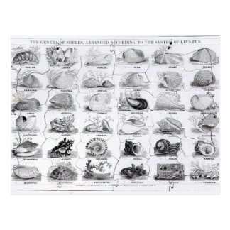 Genera of Shells jigsaw, pub. by W. Edwards Postcard