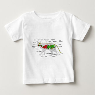 General Anatomy of a Cat Felis Silvestris Catus Shirt