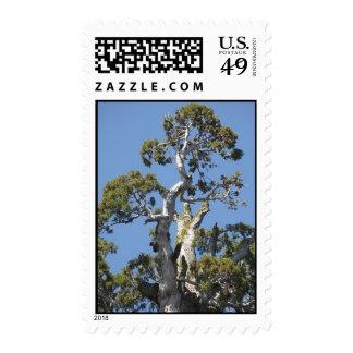 General Grant Sequoia Stamp