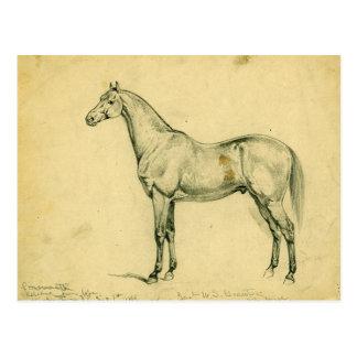 General Grant's War Horse Postcard