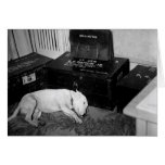 """General Patton's Bull Terrier """"Willie"""" Greeting Cards"""