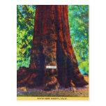 """General Sherman,"" 5000 Years Old, Big Trees Park Postcard"
