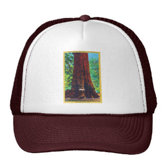 """General Sherman,"" 5000 Years Old, Big Trees Park Trucker Hat"