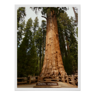 General Sherman Sequoia, Sequoia National Park Print
