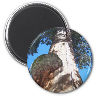 General Sherman Tree 2 Inch Round Magnet
