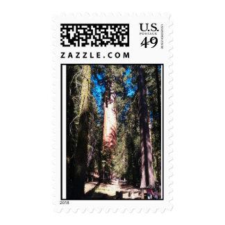 General Sherman Tree CA Postage Stamp