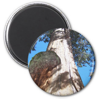 General Sherman Tree Imán Redondo 5 Cm