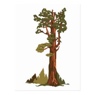 General Sherman Tree Postcard