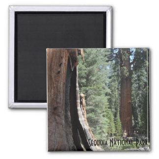 General Sherman Tree- Sequoia National Park 2 Inch Square Magnet