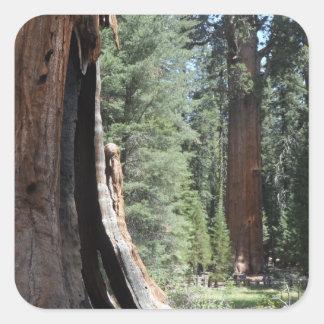 General Sherman Tree- Sequoia National Park Square Sticker
