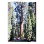 General Sherman Trees Forrests Cards